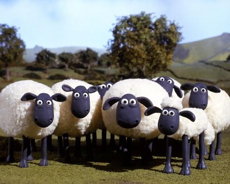 Flock1